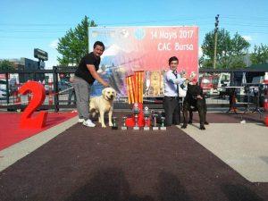 Bursa National dog show