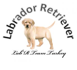 Yavru Labrador Çiftliği