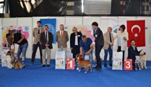 Ankara National Dog Show