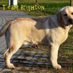 Lab'r Team Brighton 5