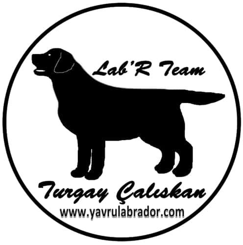 Labr Team