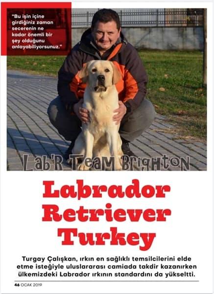cat&dog Dergi Labrador Retriever