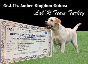 gr. j. ch. amber kingdom guinea