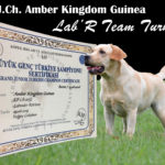 Amber Kingdom Guinea