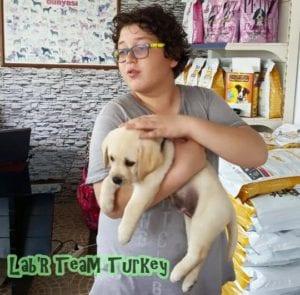 istanbul secereli labrador