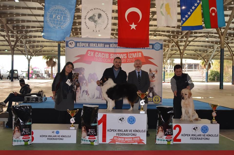 labrador köpek yarışması