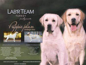 Lab'R Team Turkey 2017 Plan