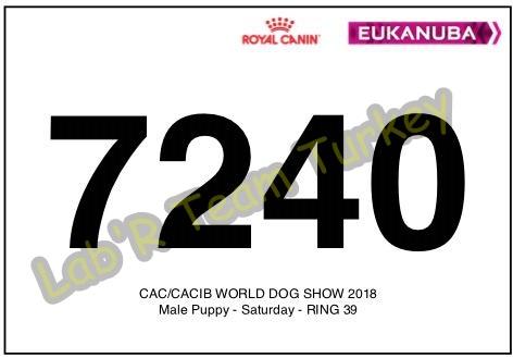 world Dog Show