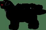 Labrador Retriever Turkey